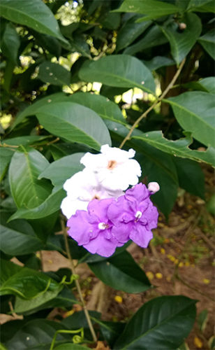 цветочные бани