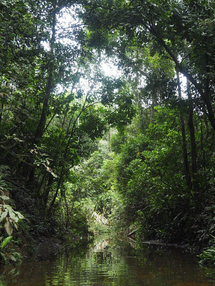 selva_alta_02